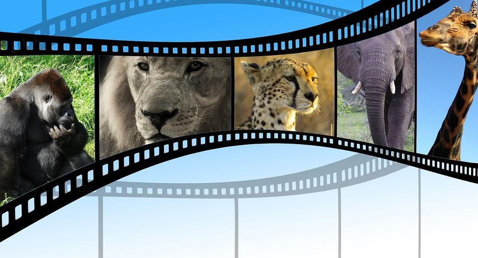 רשימת סרטים מומלצים בנושא בעלי חיים